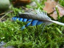 De heldere veer ligt op een groen mos in het bos royalty-vrije stock afbeelding