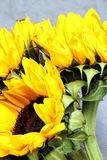 De heldere zonnebloemen sluiten omhoog op een lichte achtergrond Royalty-vrije Stock Afbeeldingen