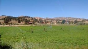 De heldere zonnige hemel voorziet het gewas van brandstof om het vee te voeden stock foto
