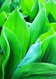 De heldergroene bladeren sluiten omhoog abstracte artistieke achtergrond, verse gebladerte macroachtergrond, botanisch bloemenpat stock foto
