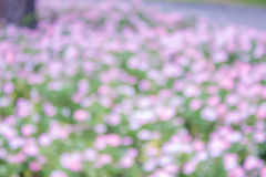 De heldergroene en roze achtergrond van de onduidelijk beeld bokeh abstracte lichte flora Stock Fotografie