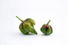 De helft rijpt groene Spaanse pepers Royalty-vrije Stock Foto