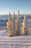 De hellingen van de ski bij de winter Royalty-vrije Stock Foto's