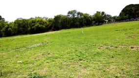 De hemel en de aard van het landschapsgras Stock Foto's