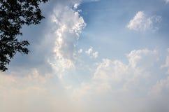 De hemel en de boom van Doipui met heel wat wolken in chaingmai Thailand Stock Foto's