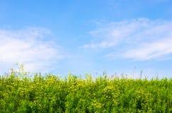 De hemel en het gras Stock Foto's