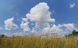 De hemel en de weide van de schoonheidswolk royalty-vrije stock afbeelding