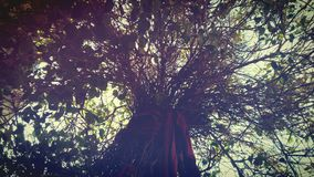 De hemel van de boomtak stock fotografie