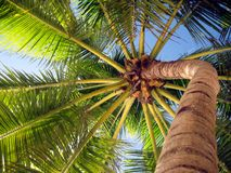 De hemel van de palm Royalty-vrije Stock Afbeeldingen