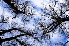 De hemel van de winter in het oude bos stock foto's