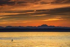 De hemel van de zonsondergang en een vogel Stock Foto
