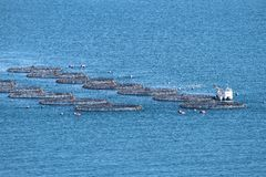 De hemel van vissen Royalty-vrije Stock Foto's