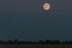 De hemelbomen van het maangebied Stock Afbeeldingen