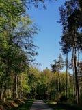 De hemelbos van het aardhout royalty-vrije stock foto's