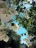 De hemelen van de zomer stock afbeelding