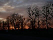 De hemelkleur van de zonsondergangboom stock fotografie