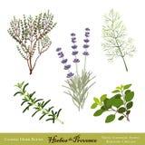 混合de herb herbes普罗旺斯 库存照片