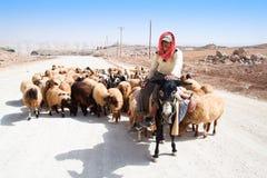 De herder op ezel leidt zijn schapen royalty-vrije stock fotografie