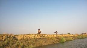 De herder wachtte zijn koeien en buffels, Mrauk-u Myanmar stock afbeelding