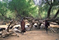 De herders van Turkana Stock Foto's