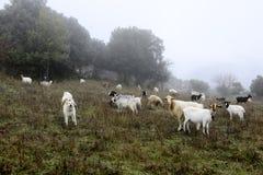 De Herdershond stock afbeelding