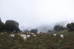 De Herdershond stock fotografie