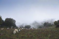De Herdershond stock foto's