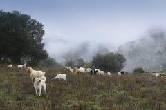 De Herdershond stock afbeeldingen