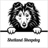 De Herdershond van Shetland - het Gluren Honden - - het hoofd van het rassengezicht op wit wordt geïsoleerd dat royalty-vrije illustratie