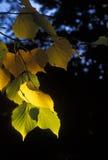 De herfst 006 Stock Afbeeldingen