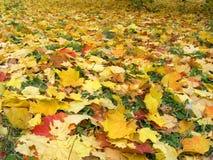 De herfst [1] stock afbeelding