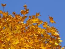 De herfst [11] Stock Foto's