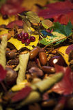 De herfst Stock Fotografie