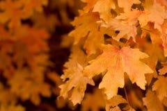 De herfst Stock Afbeeldingen