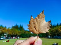 De herfst royalty-vrije stock foto