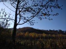 De herfst stock afbeelding
