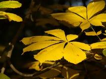 De herfst [19] stock afbeelding