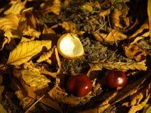 De herfst [23] stock afbeelding