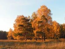 De herfst. stock fotografie