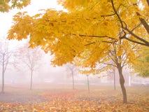 De herfst 3 Stock Foto's