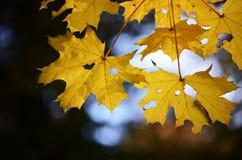 de herfst Royalty-vrije Stock Fotografie