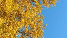 De herfst stock videobeelden