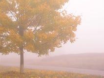 De herfst 5 Royalty-vrije Stock Foto