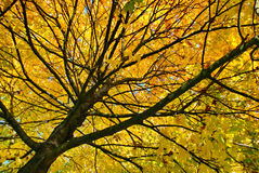 De herfst #5 Royalty-vrije Stock Foto's