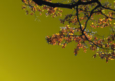 In de herfst Stock Foto's