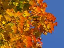 De herfst [8] royalty-vrije stock foto