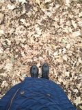 De herfst is aantrekkelijk! stock afbeelding