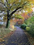 De herfst in aard Stock Afbeelding