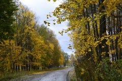 De herfst, aard, de herfst bos Bewolkte hemel Gouden de herfstbladeren Royalty-vrije Stock Afbeeldingen