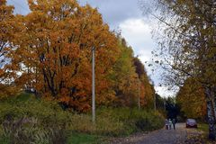 De herfst, aard, de herfst bos Bewolkte hemel Gouden de herfstbladeren Stock Afbeelding